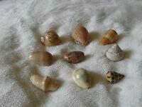 LOT DE DIVERS Coquillages de collection  (593)