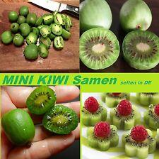 15x Mini Kiwi selbstbefruchtend Graines Semences Plante Jardin RARE NEUF #204