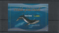 Sierra Leone Whales Sheets Animal Postal Stamps