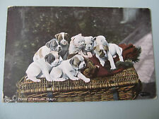 Vintage TUCK's postcard - Types of English Beauty - Group of puppies used