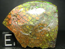 Ammolite - Canadian Ammonite Fossil - Lots of Color - Hand Picked - M1908-12.18g