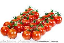 Cocktail Tomate CILIEGIA 10 Semillas frescas Primeros lugares Tomaten