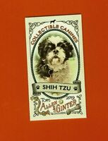 2019 Topps Allen & Ginter Collectibles Canines Mini Shih-Tzu CC-22