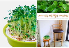 Grow Bean Sprout Home Kit Indoors Korea Well-being Propagation Seeds Tray Plate