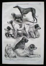 Dealer or Reseller Listed Engraving Animals Art Prints