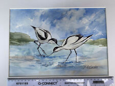 More details for original framed watercolour painting signed - avocet birds