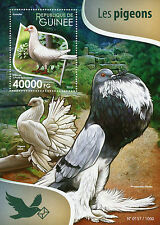 Guinea 2015 MNH Pigeons 1v S/S Birds Doves Cumulet Pomeranian Pouter Stamps