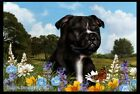 Summer Floor Mat - Staffordshire Bull Terrier 39231