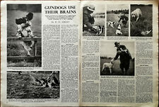 More details for gundogs use their brains vintage shooting article by b. n. ghent 1949