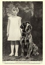 1930s Antique Wirehaired Pointing Griffon Print Guillaume Guillaumiere 3987a
