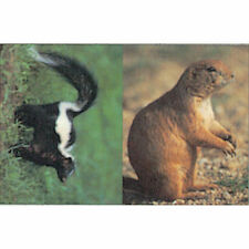 "Delta Tru-Life Western Series Small Game - Prairie Dog/Skunk, 21"" x 28"""