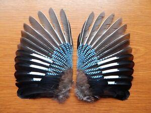 Pair Dried Jay Wings (Garrulus glandarius)  Fly Tying Arts Crafts Taxidermy