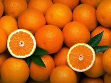 10 Orange tree seeds! delicious fruit!! Fresh From Portugal!D. João type!