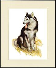 ALASKAN MALAMUTE GREAT SLED DOG PRINT MOUNTED READY TO FRAME
