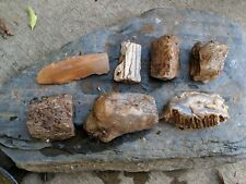 Limb cast lot from South fork crooked river Oregon 4lb actual lot