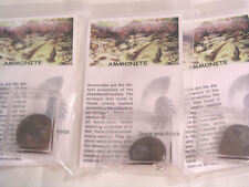 Ammonite in display box package with information 2 packages per winner