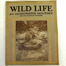 Wild Life old magazine Douglas English June 1914 stoat plover photos animal bird