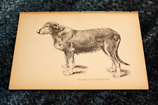 "Antique 1892 Dog Show Champions Irish Wolfhound ""Sheelah"" Plate Print Engraving"