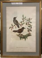 Hand colored ornithological lithograph by J. Gould & W. Hart -