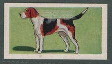 Foxhound Dog Canine Pet Animal Trade Ad Card
