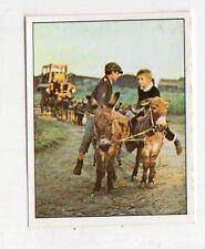 figurina - PANINI PINOCCHIO 1972 - numero 280