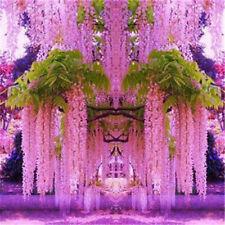 30pcs Purple Wisteria Flower Seeds Perennial Climb Plants Bonsai Home Garden TCA