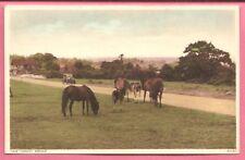 New Forest Ponies postcard. Photochrom Co. Ltd. 81134.