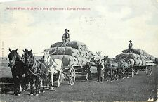 Postcard Hauling wool to market one of Oregon's staple Products Horses & Wagons