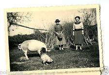 Portrait femmes nourrissant basse cours cochon coq - photo ancienne an. 1940