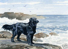 FLAT COATED RETRIEVER  Painting ART Print 8 x 10 Signed by Artist DJR