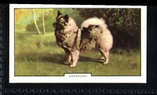 Gallaher Dogs 2nd Series 1938 - Keeshond No. 46