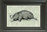 ORIGINAL Mole Vintage Dictionary Page Art Print - Wall Hanging Picture 65D