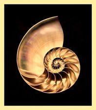 LARGE NAUTILUS SHELL GOLDEN RATIO GEOMETRY NATURE ARTWORK PRINT POSTER