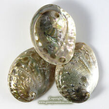 3 x Polished Blue Abalone Shell 5-7cm perfect for crafts and aquariums
