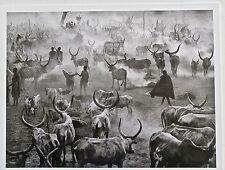 Sebastiao Salgado Print  8 Kei Southern Sudan -Large Herd  2006 13x10