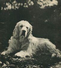 Clumber Spaniel Dog Vintage 60 year-old Photo Print
