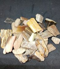 PETRIFIED WOOD TUMBLED CHIPS 50g ~~ please note chips are larger in this batch