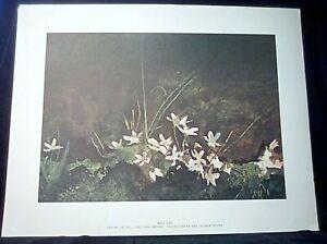 "Andrew Wyeth ""May Day"" Print 17""x13"" From 'Four Seasons' Portfolio ca 1960's"
