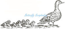 Ducks Mallard Mom & Babies Wood Mounted Rubber Stamp Northwoods Rubber Stamp New