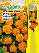 Studentenblume 'Orange Boy verzweigt   'Tagetes patula' 50130 Bienenweide
