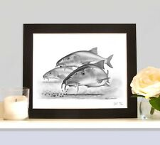 BARBEL On The Halibut Pellets MOUNTED Art Print Drawing Picture Fishing Present