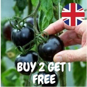 BLACK Tomato Seeds Tomatoe Seeds Vegetable Fruit Seeds UK Seller
