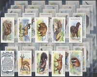 ADKIN-FULL SET- WILD ANIMALS OF THE WORLD (50 CARDS) - EXC+++