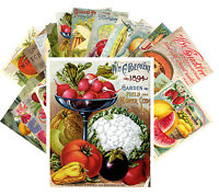 Postcards Pack [24 cards] Fruits and Veges Vintage Seed Pocket Garden CC1016