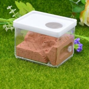 Ant Nest Plaster Ant Farm Formicarium Acrylic Educational Insect Anthill  Box