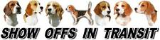 Beagle Show Off Dog Car Sticker By Starprint