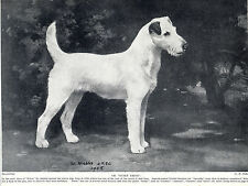 WIRE FOX TERRIER VINTAGE DOG PRINT CHANDON COCKTAIL AND FILM STAR JEAN MELVILLE
