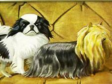 Fuertes 1919 Japanese Spaniel Yorkshire Terrier Print Matted