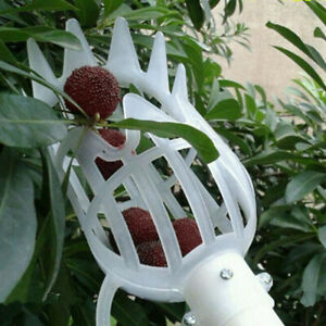 1 Stück Kunststoff Obstpflücker Ohne Pol Obstsammler Garten  PflückwerkzO*Z9