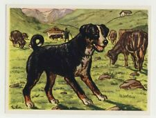 Nº 43 Bouvier Appenzell appenzeller vieille chromo dogs dogs image 50s card